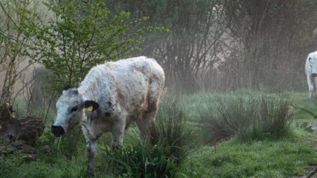 臉書屏蔽牛照片 竟因涉及「性內容」引發關注
