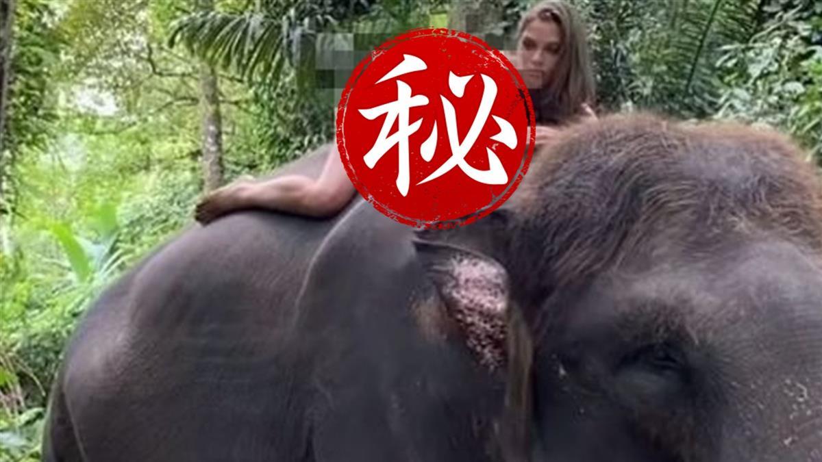 辣模全裸趴騎大象20萬人朝聖 動保團體看照片怒炸