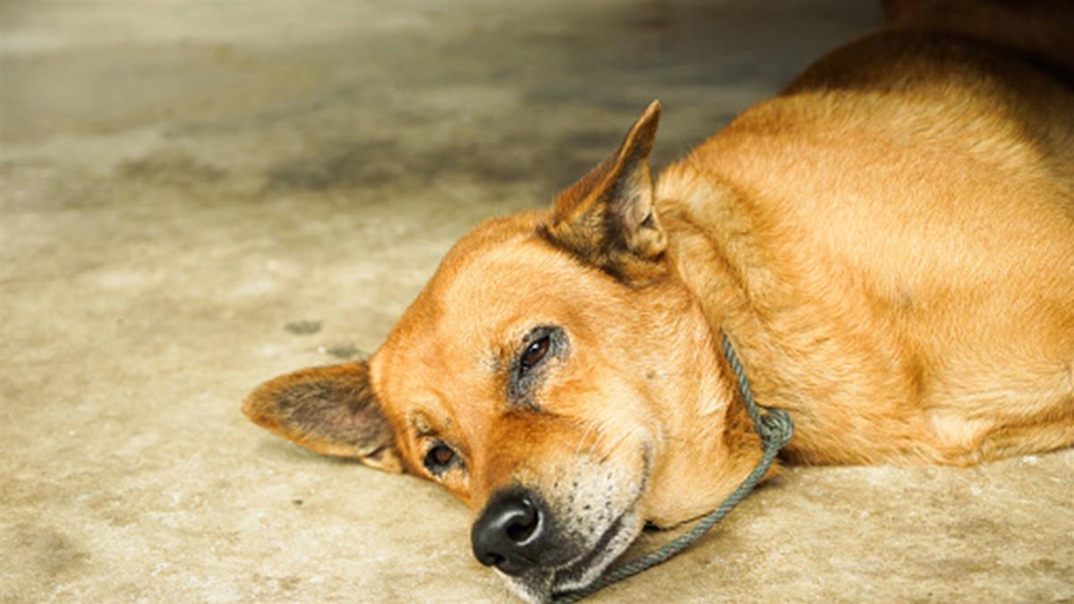 七星潭風景區試辦遊蕩犬誘捕絕育 任意餵食要罰