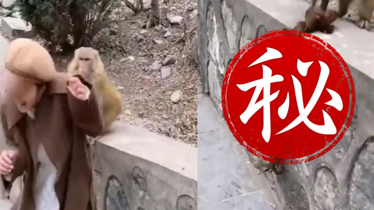 餵食野猴遭襲!牠抓出濃密毛髮 意外揭正妹秘密