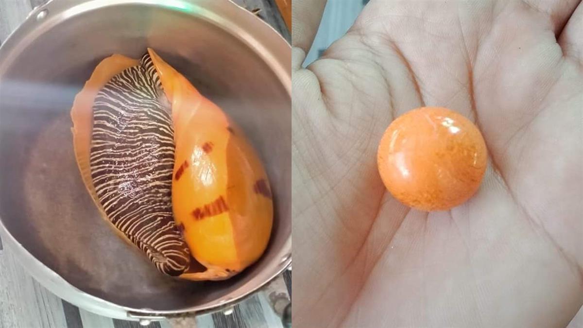 暖男花50元買海螺寵妻 一咬吐出755萬「珍珠之王」發財了