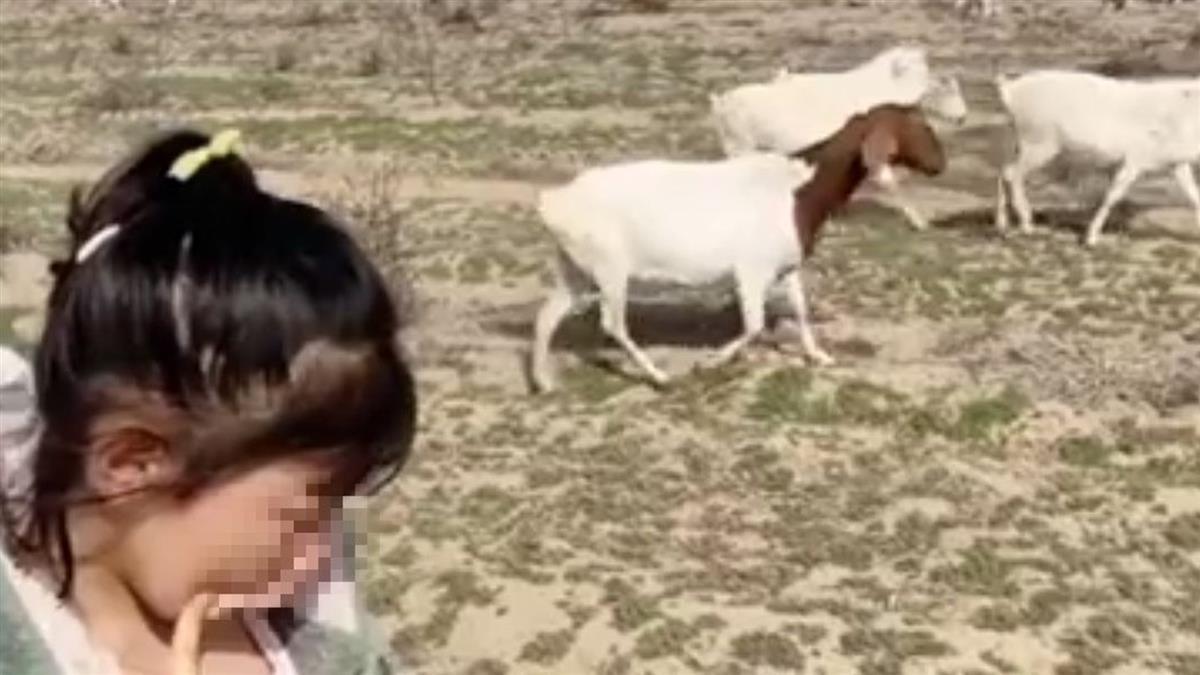 7歲妹不寫作業要「放羊」 媽帶到草原崩潰了:我數不完