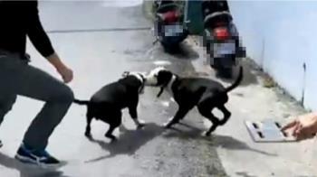 突遭2比特犬失控狂咬 退休搜救犬縫近100多針