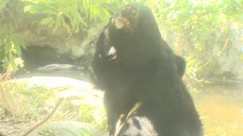 遊客控動物園黑熊過瘦 園方:都是高齡、體重正常