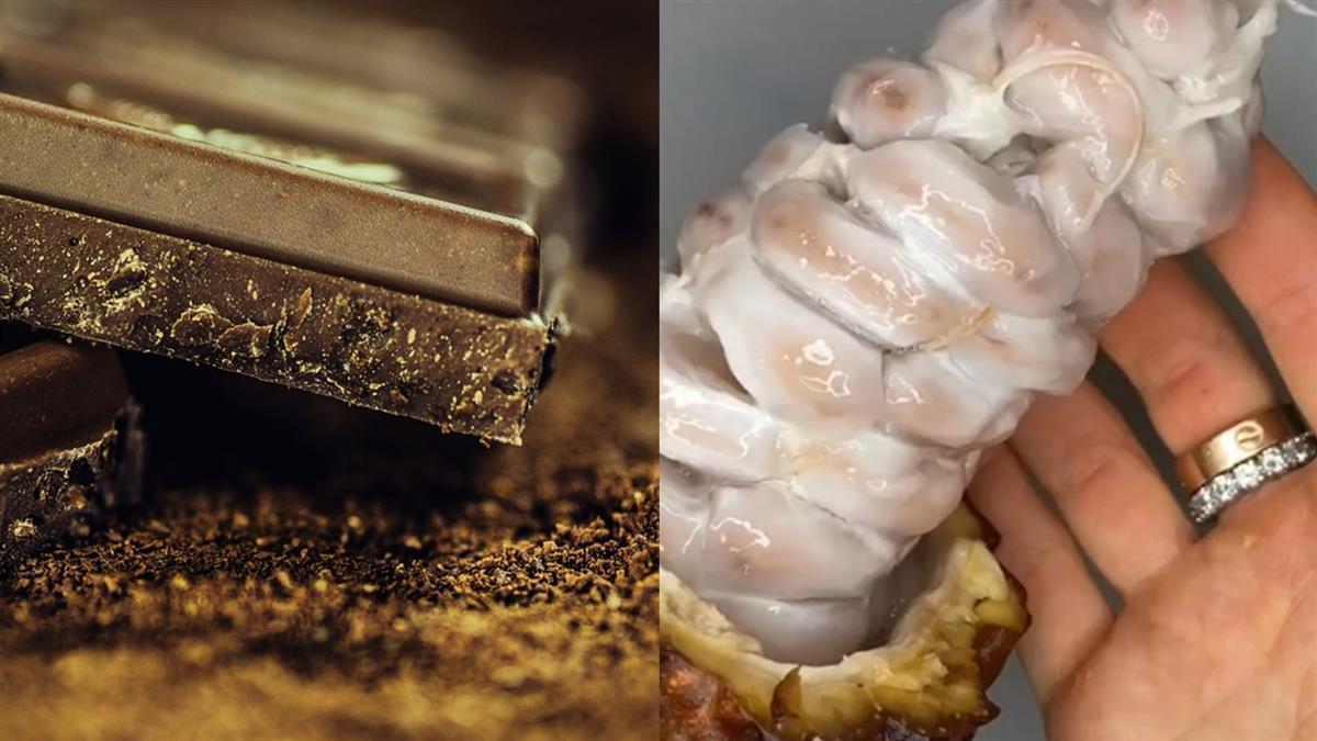 巧克力原料真面目曝 白色黏膜包裹超嚇人