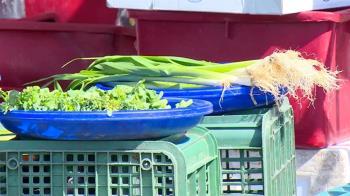 最強菜農:菜價全崩盤 農糧署證實供過於求