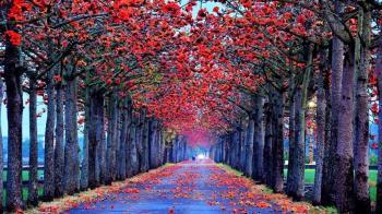 世界最美!白河木棉花季火紅綻放 快牽心愛的人領略浪漫花語