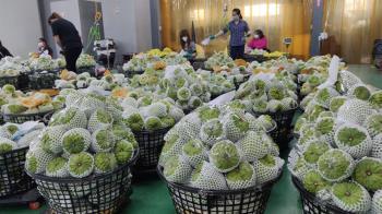 鳳梨遭大陸禁止進口  台東農會擔心釋迦也遭禁