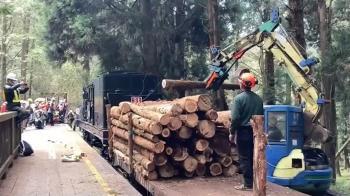 經典重現!阿里山蒸汽小火車頭運木材 鐵道迷搶拍