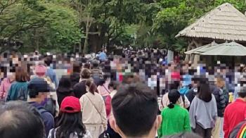 台北動物園人潮爆滿「看不到路」他吃麥當勞排1小時