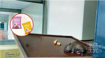 知名寶寶米餅超黑心!蟑螂老鼠滿地爬 查緝人員:不要動