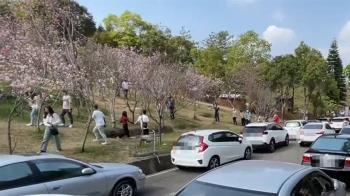 新社櫻花露營區人車爭道又髒亂 官網遭灌爆一星負評