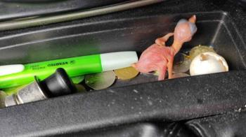 天氣太熱!鳥蛋放車裡「孵出小鳥」 他傻眼:要怎麼照顧?
