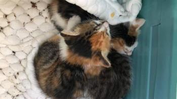送養貓咪開條件「1周家訪5次」 網驚:是養妳吧?