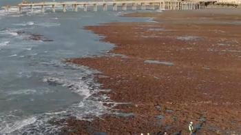 藻礁公投連署逾50萬份  盼理性思辨三接遷址