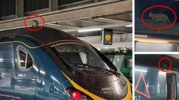 虎斑貓淡定坐列車頂 站務員花2.5hr請牠下車
