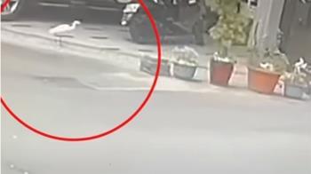 家門前蓮花盆魚被偷 警抓竊賊竟是「白鷺鷥」