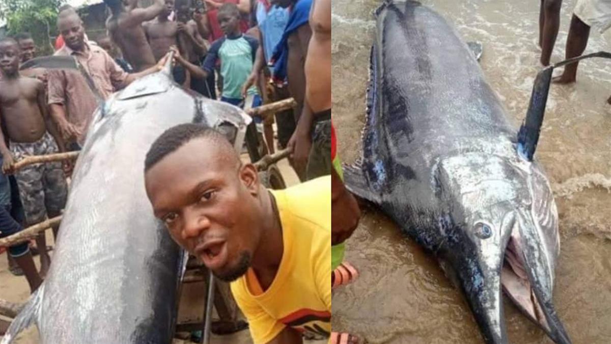 慷慨男釣3公尺巨魚「煮一桌請全村」 吃完秒崩潰:上千萬飛了