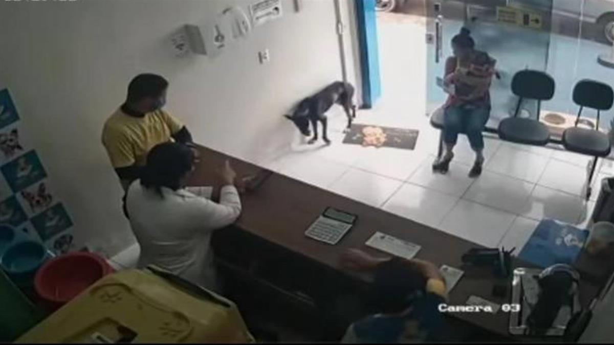 小黑狗受傷「自己去獸醫院求救」 豎飛機耳舉手搖尾:我好痛