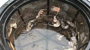 清水塔驚見「12隻破碎鼠屍」 她崩潰:這是全家的飲用水