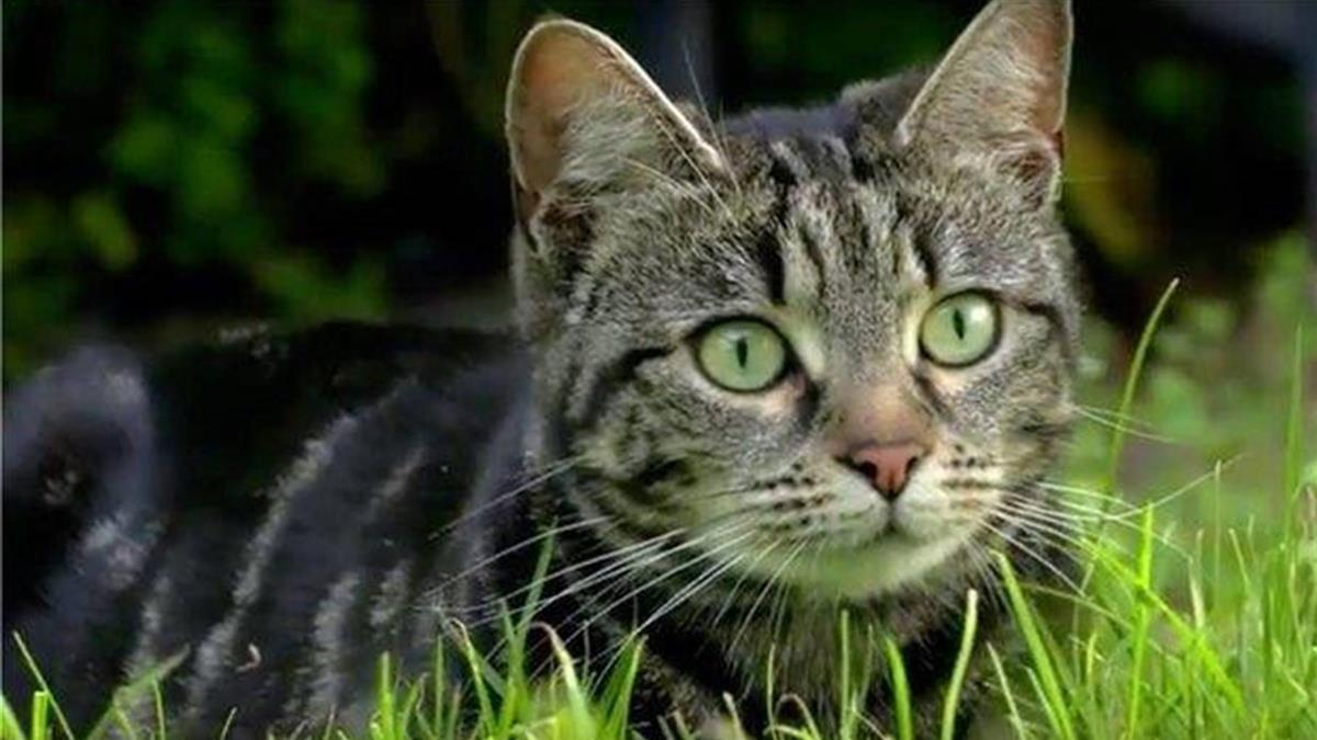 寵物小知識:世上最長壽的貓能活多久?
