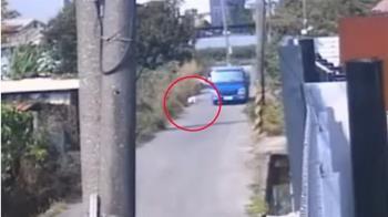 獨/比熊犬溜出家門 遭小貨車惡意輾亡飼主報警追查