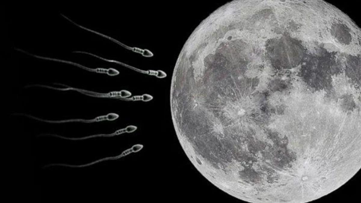 科學家提議向月球發射670萬精子 造「月球方舟」防世界末日