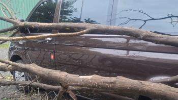 台鐵巨木遭強風吹斷誤砸小巴 車主怒疑遭踢皮球