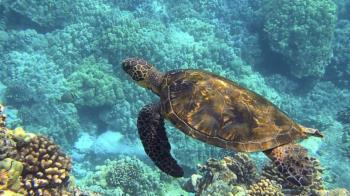 集體中毒!34人吃海龜後送醫 慘釀19死…9人是兒童