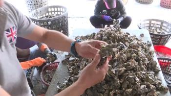 越南進口蚵5年增260倍 蚵農憂影響生計