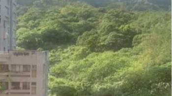 影/南港山中傳「恐龍嘶吼聲」 72秒影片曝光毛炸