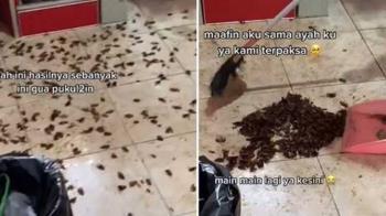 噴2下殺蟲劑廚房湧現「蟑螂海」 網笑:殺蟲劑廣告?