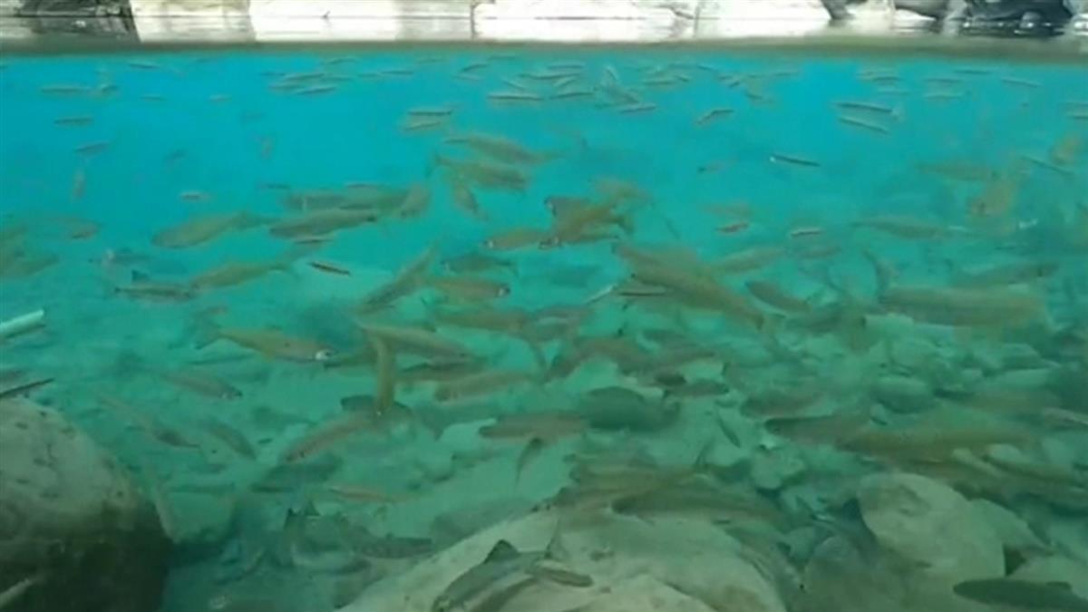 水底拍鯝魚悠游 達娜伊谷天然「水族箱」超療癒