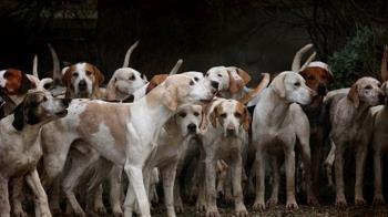 男當街性侵30隻母犬 過程全被目睹遭逮嗆:牠們沒反抗