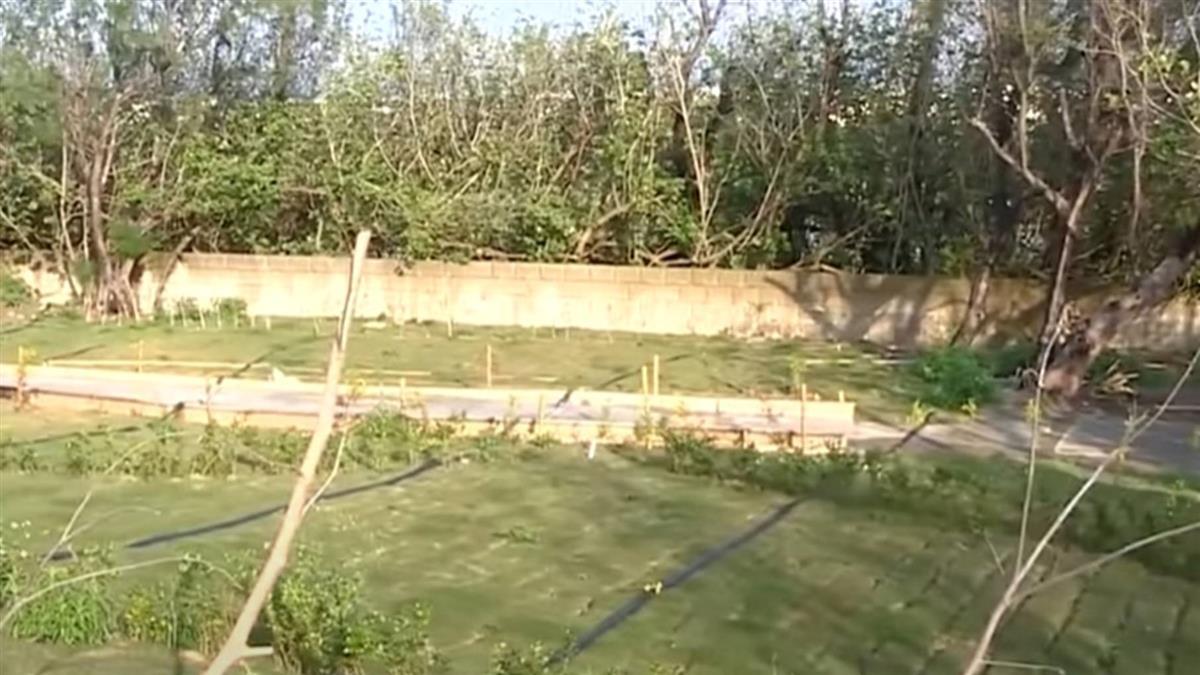 獨/豪華露營區砍樹惹怒居民 業者:蛇出沒是關鍵