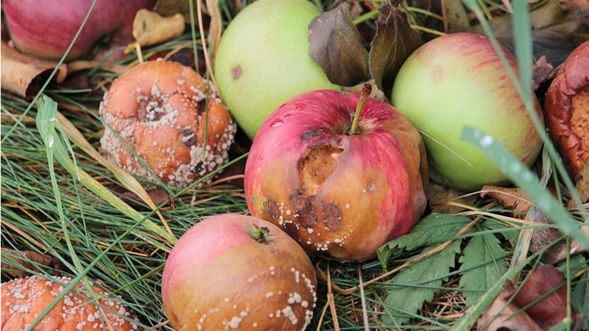 男童身上飄「爛蘋果味」  醫師檢查驚:血糖爆表測不了