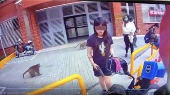 中山女大生「帶槍」取餐防獼猴 市府:正當防禦!