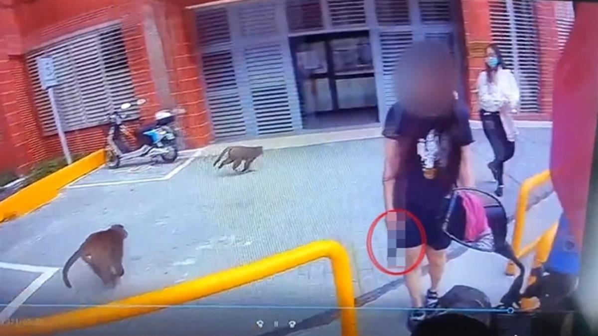 獼猴太猖狂!中山大女學生叫外送帶槍防搶食