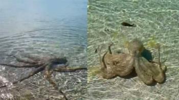 海中驚見巨大海怪!男好奇近看 下秒遭攻擊「留紅腫血痕」