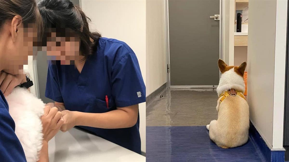 太魯閣號帶走暖心女獸醫 她貼愛犬背影:等不到妳回來