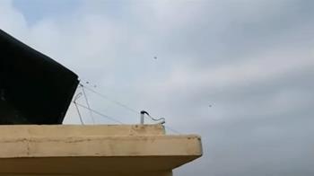 寓頂樓養蜂螫傷鄰居 法官認定非危險動物不罰
