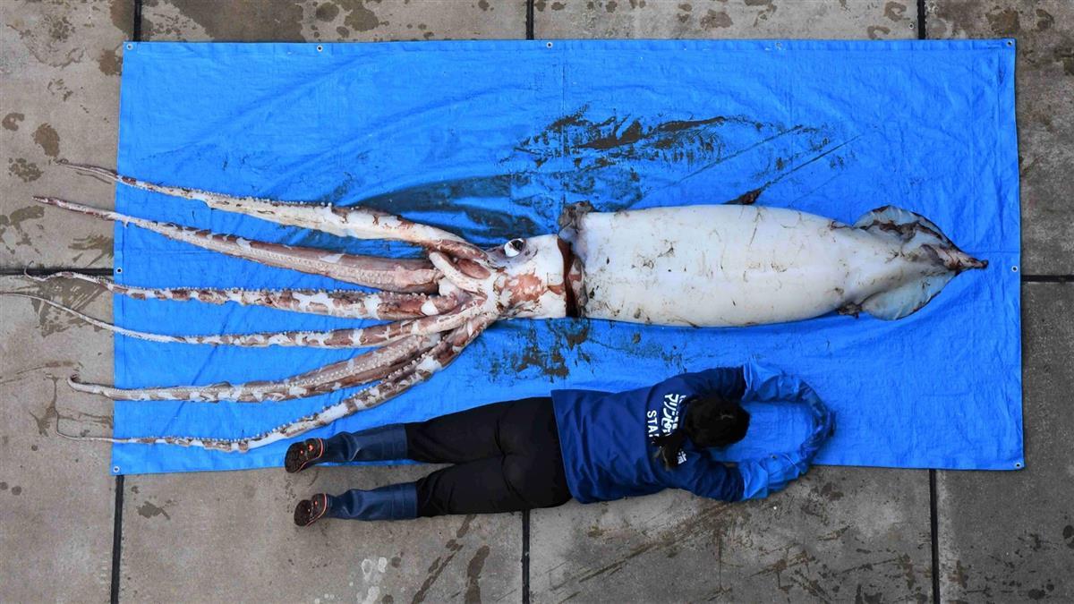5周2隻「深海巨烏賊」被沖上岸 網嚇壞:大地震要來了?