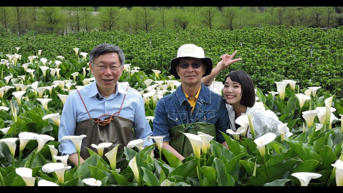 臺北大縱走7路線揭密 陽明山賞花秘境大公開