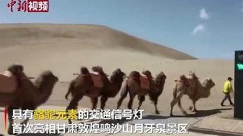 「紅駱駝停 、綠駱駝行」 世界首款駱駝專屬紅綠燈誕生