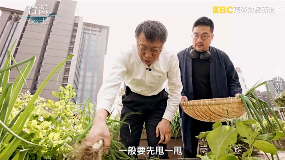 市長柯文哲偷摘菜被抓包?!台北市推行綠屋頂降溫減碳又環保!