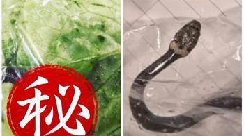 婦超市買菜驚見毒蛇 專家曝嚴重後果:器官衰竭