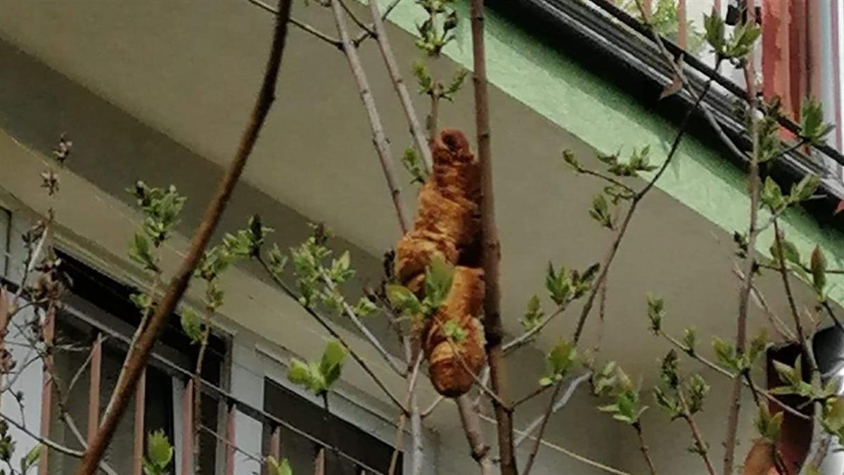 開窗驚見「神祕無頭野獸」 女嚇壞求救:牠在樹上2天了