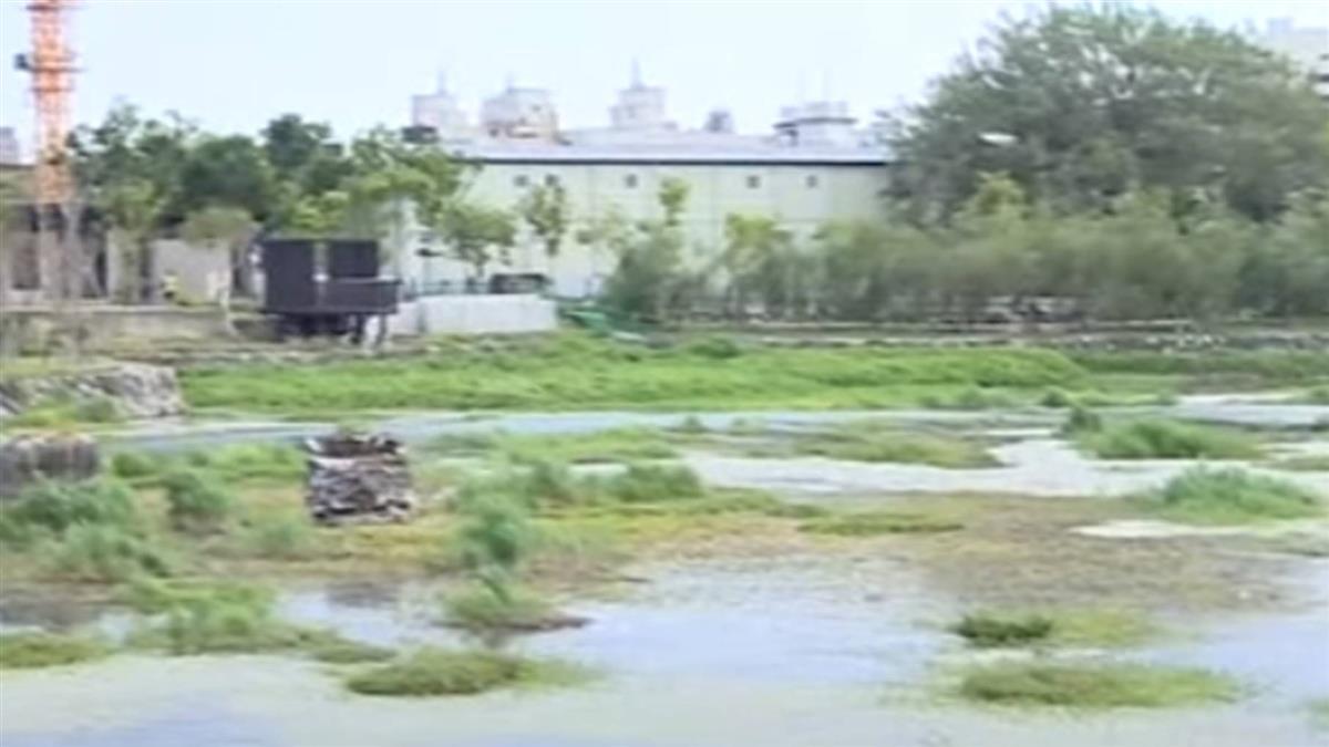 獨/鄰帝國糖廠景觀湖「水降1米」變沼澤 魚群狂跳像死掉