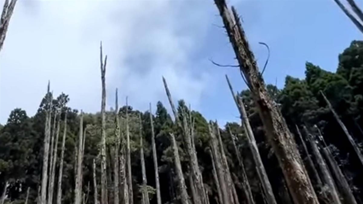 獨/獨家直擊!忘憂森林水霧美景消失「乾到變草原」