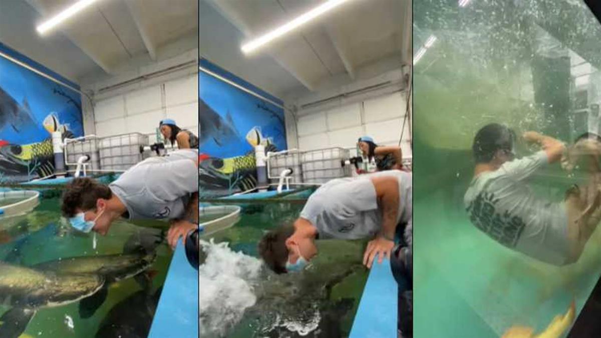 網紅用嘴餵食「巨骨舌魚」 下秒遭物理擊暈沉入水中